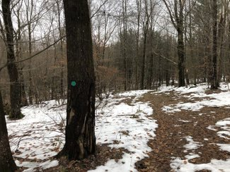 128 acres Woods Harpursville NY Route 79