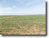 257 Acres offered in multiple tracts