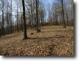 Tennessee Hunting Land 25 Acres 24.82 Ac, Totally Wooded, Ideal Hunting