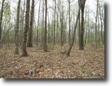 Tennessee Land 38 Acres 37+ac Totally Wooded,Mtn. Views,Utilities