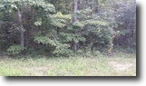 Tennessee Farm Land 1 Acres 1.03 Ac In Cumberland Cove, Tn For $9900