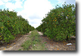 Florida Land 38 Acres Babson Park Scenic Highway Groves