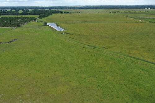 alturas shreck road pasture property bartow florida