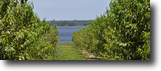 Florida Land 10 Acres Lake Clinch Residential