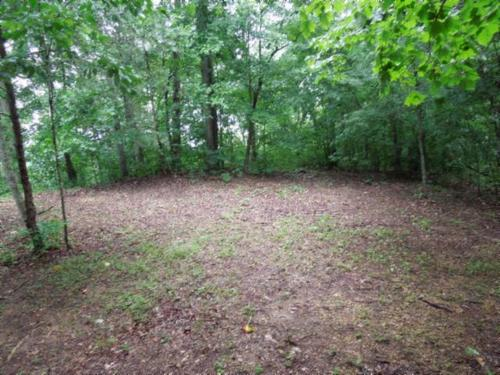 land marketable timber sping fed pond property cookeville tennessee