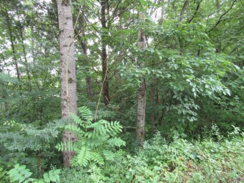 land totally wooded with marketable property sparta tennessee
