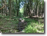 33 acres Hunting Land in Perrysburg NY