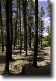 New Mexico Hunting Land 1 Acres Calling All Hunters and Explorers!!!