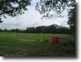 Wooded and cleared acreage: home, cattle