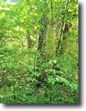 Kentucky Hunting Land 125 Acres Timber, Wooded, Creek Frontage In Metcalfe