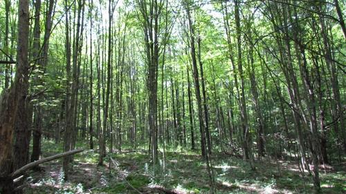 land pasture timber lisle ny property