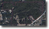 Old Florida Natural Beauty 118.96 Acres