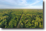 Florida Land 9 Acres McGee Branch Timberlands