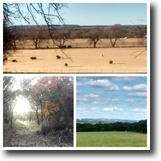 Texas Farm Land 8 Acres REDUCED $1,000. 8 AC By Owner, Iredell, TX
