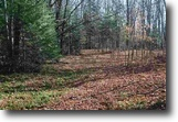 Wooded 240 Acres 1118566