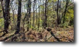 Tennessee Hunting Land 11 Acres 10+Ac/Marketable Timber/Great Hunting