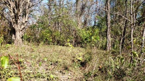 land marketable timber great hunting property whitleyville tennessee
