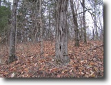 Tennessee Land 13 Acres 13ac W/Mtn View For Miles, Building Site