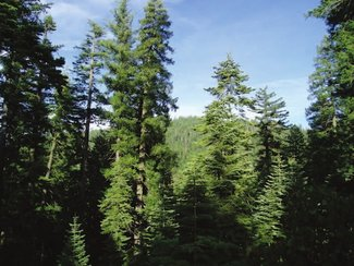 Located in a beautiful mixed conifer forest, including Douglas-fir, Cedar, and Ponderosa Pines.