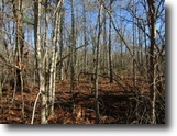 Tennessee Land 1 Acres 1.10 Ac In Cumberland Cove, Tn For $6900