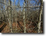 Tennessee Land 3 Acres 3Ac In Cumberland Cove, Tn For $16,900