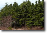 Nova Scotia Land 46 Acres Forest and vacant land FOR SALE