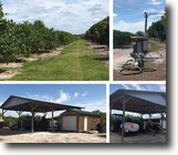 Florida Ranch Land 40 Acres Producing Orange Grove