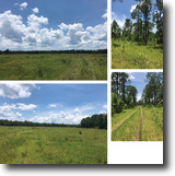 Middle Haw Creek - 20 to 40 Acre Tracts