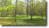 15 acres Lot in Lapeer NY Quail Hollow Rd