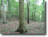 Tennessee Land 1 Acres 0.82 Ac To Build Dream Hm,Mtn Views