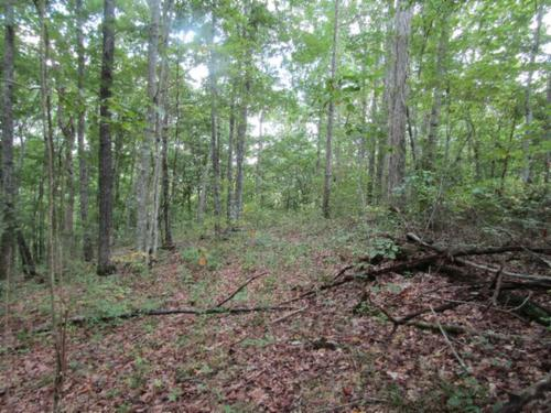 house & land totally wooded mtn views secluded property celina tennessee