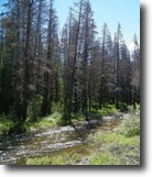 Colorado Hunting Land 40 Acres Finance 40 ac Colorado MiningClaim w/Creek