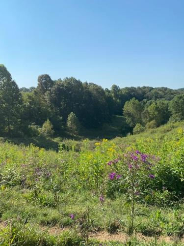 house & land farm in carter co ky property