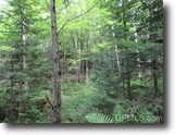 Wooded Recreational 75 Acres 1123354