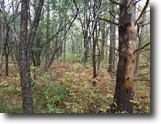 9 acres Wooded Lot Freeville NY Caswell Rd