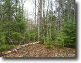 Michigan 40 Acre Wooded Parcel 1124035