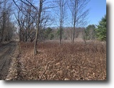 51 acres Hunting in Hinsdale NY Cooper Rd