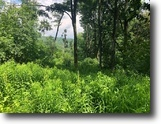 New York Hunting Land 42 Acres 42 ac Hunt Humphrey NY S. Cooper Hill Road