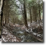 New York Hunting Land 13 Acres New Lisbon Woods