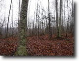 Tennessee Ranch Land 71 Acres 70+Ac,Wooded,Private,Secluded,Hunting Land