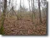 Tennessee Land 41 Acres 41 Ac,Wooded,Private,Secluded,Hunting Land