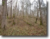 Tennessee Land 46 Acres 46Ac,Wooded,Private,Secluded,Hunting Land