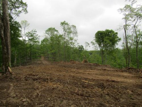 land at dead end of rd joins corp eng investment property celina tennessee