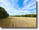 Kentucky Ranch Land 37 Acres 37.14+/- AC in 3 Parcels - Absolute
